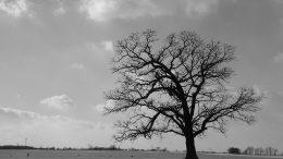 tree-2246628_960_720