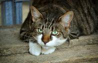 cats-eyes-2671903_960_720