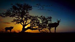 africa-2785723_960_720
