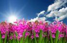 flower-3219718_960_720