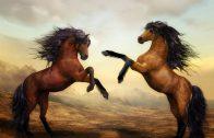 horses-2904536_960_720
